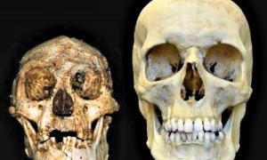Portada - Cráneos de 'Homo floresiensis' (izquierda) y 'Homo sapiens'. (derecha) (Fotografía: 20Minutos/Peter Brown)