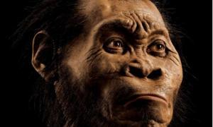 Portada-reconstrucción de la cabeza del Homo Naledi realizada por el paleoartista John Gurche, que trabajó unas 700 horas recreando esta cabeza a partir de las tomografías de los huesos encontrados. Imagen: Mark Thiessen/National Geographic