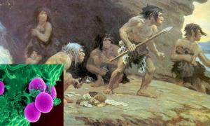 Portada-'Neandertales de Le Moustier', Museo Americano de Historia Natural. Ilustración de 1920 obra de Charles Robert Knight. (Public Domain). Detalle: Neutrófilo humano, célula del sistema inmunitario, fagocitando a un germen SARM (Staphylococcus aureus resistente a la meticilina). (Public Domain)