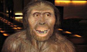 Portada - Modelo de Australopithecus afarensis basado en los restos fósiles de Lucy. (Public Domain)
