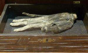Portada-Mano de Gloria del Museo de Whitby, Inglaterra. (CC BY SA 4.0)