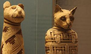 Portada-Momias animales del antiguo Egipto expuestas en el Museo Británico. Los expertos no están seguros de si el animal momificado descubierto en Turquía es un gato, otro animal, o un fraude. (Mario Sánchez/ CC BY SA 2.0)