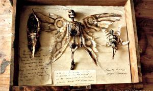 Supuestos restos de hadas expuestos en el llamativo museo. (Fotografía: Merrylin Cryptid Museum)