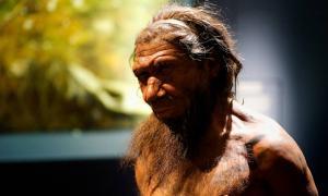 Portada-Un millón de años de la historia del ser humano en el Museo de Historia Natural. (CC BY 2.0)