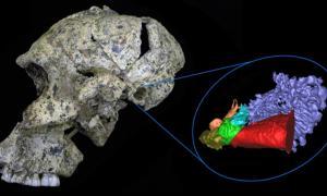Portada-Reconstrucción virtual de un oído de hace dos millones de años. Rolf Quam, CC BY-ND