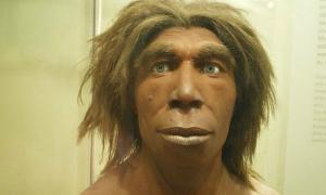 Portada-Reconstrucción de un Neandertal expuesta en el Museo de Historia Natural de Berlín, Alemania. (כ.אלון/CC BY-SA 3.0)