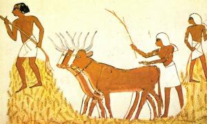 Portada - Trilla del trigo en el antiguo Egipto. Pinturas murales de la tumba de Menna en Sheij Abd el-Qurna, Egipto. (Public Domain)