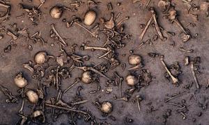Portada-Las excavaciones de un antiguo campo de batalla en el norte de Alemania han revelado indicios de una batalla a gran escala, como por ejemplo una elevada concentración de huesos, lo que podemos comprobar observando esta fotografía del yacimiento tomada en el año 2013. En un área de 12 metros cuadrados se hallaron hasta 1478 huesos, entre ellos 20 cráneos. Fotografía: Landesamt für Kultur und Denkmalpflege Mecklenburg-Vorpommern/Landesarchäologie/C. Harte-Reiter