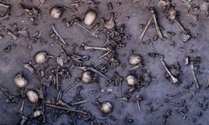 Portada - Los restos de los guerreros se encuentran esparcidos por todo el antiguo campo de batalla de Tollense. Fotografía: Landesamt für Kultur und Denkmalpflege Mecklenburg-Vorpommern/Landesarchäologie/C. Harte-Reiter