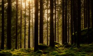 Portada-bosque-Suecia.jpg