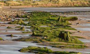 Portada - Restos del antiguo bosque que formó parte hace miles de años de la antigua región de Doggerland, hoy sumergida. Fotografía: North News and Pictures.