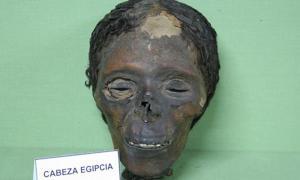 Portada - La cabeza momificada. Fotografía: Museo de Antropología Médica, Forense, Paleopatología y Criminalística, Profesor Reverte Coma