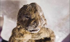 Portada-'Conseguimos obtener algunas muestras de piel junto con tejido muscular, y esperamos que encuentren lo que buscamos en estas muestras.' Fotografía: Vera Salnitskaya