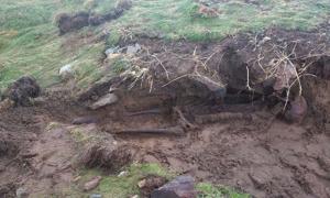 Portada - Restos esqueléticos hallados después de las tormentas en Kilmore Quay, Irlanda. Fotografía: Jim Campbell