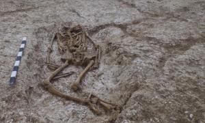 Portada - Esqueleto hallado en el cementerio anglosajón recientemente descubierto cerca de Stonehenge. Fotografía: Wessex Archaeology