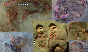 Portada - Algunos de los restos de mascotas del antiguo Egipto descubiertos recientemente en Berenice. Fotografía: Antiquity/Marta Osypińska