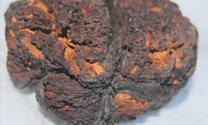 Portada - Tejido cerebral de hace 4.000 años hallado en Seyitömer Höyük, Turquía. (UC San Diego Health)