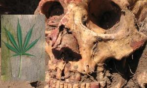 Portada - Cráneo Yamnaya hallado en la región de Samara y coloreado con ocre rojo. Fotografía: Natalia Shishlina