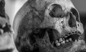Portada - Antiguo cráneo (Dominio público). Nota: Esta imagen es meramente representativa, y no es la foto de uno de los cráneos recientemente descubiertos en Mayo, Irlanda. Aún no se han presentado públicamente fotografías de los huesos neolíticos de Mayo.