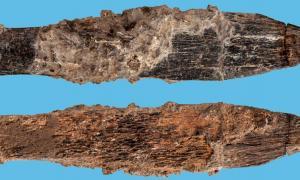 Portada - Cuchillo de hueso descubierto en Marruecos, el más antiguo atribuido a los Aterienses. Fuente: © Patronato del Museo de Historia Natural de Londres (2018), S. Bello y Mohammed Kamal (Fotokam, Marruecos)