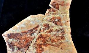 Portada - Detalle de una plaqueta encontrada en 1957 en la Cueva del Parpalló que representa a una yegua en estado de gestación. Su datación se calcula en, al menos, 12.000 años de antigüedad. Forma parte de la colección del museo local creado en la década de los años 90 del pasado siglo. (Joanbanjo/CC BY-SA 4.0)