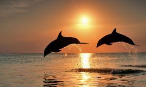 Portada-Delfines nariz de botella saltando al atardecer. (CC BY 2.0)