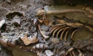 Portada-El ADN fue extraído del molar de este esqueleto, datado en casi 10.000 años de antigüedad y descubierto en el refugio de roca de Kotias Klde, situado al oeste de Georgia. Fotografía: Eppie Jones.