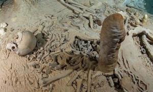 Portada - Esqueleto humano prehistórico de la cueva de Chan Hol cercana a Tulum, en la península mexicana de Yucatán. Esta fotografía se tomó con anterioridad al saqueo de la cueva perpetrado por submarinistas desconocidos. Fotografía: Tom Poole/Liquid Jungle Lab