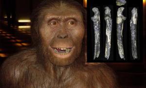 Portada-Recreación de un Australopithecus afarensis (CC BY-SA 3.0). Detalle: cúbito izquierdo de un individuo adulto de Australopithecus afarensis. En el yacimiento de Kantis se han descubierto además varios dientes fosilizados. Fotografía: Universidad de Kyoto.