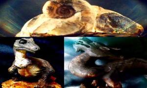 Portada - Fotocomposición: fósil, dinosaurio y dragón. (Legendz Collective)