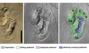 Portada - Huellas humanoides descubiertas en Creta. (Imágenes aportadas por el autor)