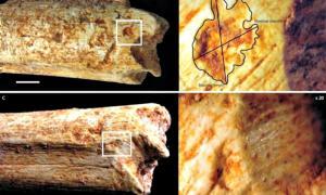 Portada - Marcas de dientes en el fémur de un homínido de hace 500.000 años. (Fotografía: El Mundo/Camille Daujeard/PLOS ONE)