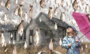 Portada - Ilustración de una lluvia de peces. (Amberjack)