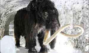 Portada - Mamut lanudo en el interior de una cueva del 'permafrost' de Yakutsk. Fotografía: The Siberian Times