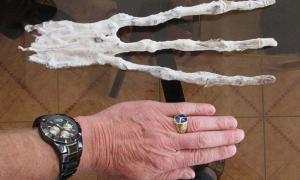 Portada - La mano momificada con tres dedos descubierta hace aproximadamente un año en un túnel del desierto peruano. (Fotografía: Brien Foerster / Hidden Inca Tours)