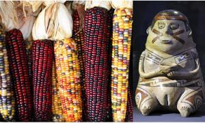 Portada-Diversos tipos de mazorcas de maíz (Sam Fentress/ CC BY SA 2.0) y estatuilla de la cultura Casas Grandes. (1200 – 1450) (Public Domain)