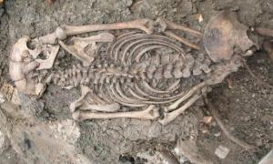 """Portada - Hombre adulto (ID 2072) enterrado en """"Götes mack"""", Sigtuna. El esqueleto fue descubierto en el año 2008 cuando los arqueólogos retiraron un árbol en un cementerio del siglo XI. El esqueleto se encontraba adherido a sus raíces. Sigtuna era una ciudad llena de inmigrantes en la época vikinga. Fuente: Museo de Sigtuna"""
