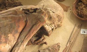 Portada - La momia egipcia de Turín conocida como 'Fred', Museo Egipcio de Turín. Fuente: CC BY-SA 3.0 Autor: Ashley Cowie