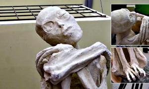 Portada - Fotocomposición con diferentes imágenes de la supuesta momia extraterrestre descubierta recientemente en Nazca. (Código Oculto)