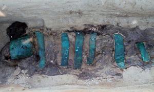 Portada - La matriz del adulto estaba cubierta de la cabeza a los pies con placas de cobre. Fotografía: Alexander Gusev