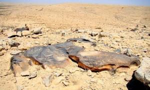 Portada - Petroglifos del desierto del Negev. (Igor Svobodin/Flickr)
