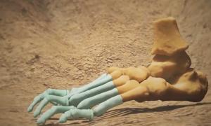 Portada - Modelo del pie de la Niña de Dikika, una joven Australopithecus afarensis que vivió hace más de 3 millones de años. Se han añadido al modelo los elementos que le faltan al fósil. Fuente: Departamento de Medicina de la Universidad de Chicago/Captura de pantalla de Youtube