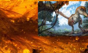Portada - Principal: silueta de los huesos de la cola, tejidos blandos y puntos de inserción de las plumas. Ryan McKellar/Museo Real de Saskatchewan. Detalle: Impresión artística de un pequeño celurosaurio en un paisaje boscoso. Cheung Chung y Liu Yi.