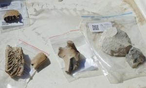 Portada - Huesos y herramientas de piedra descubiertos en el antiguo poblado maorí recientemente descubierto en Nueva Zelanda. Fuente: Cinema East