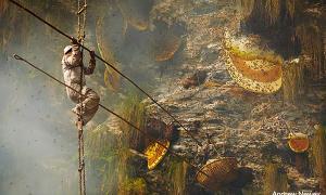 Portada-recolectores-miel-Nepal.jpg
