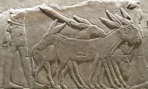 Portada - Relieve del antiguo Egipto en el que aparecen asnos. Museo Egipcio de Berlín (Frank M. Rafik / Flickr)