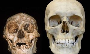 """Portada-Las dentadas sonrisas del cráneo de un """"hobbit"""" (izquierda) y un humano moderno (derecha). Fotografía: profesor Peter Brown, Universidad de Nueva Inglaterra"""