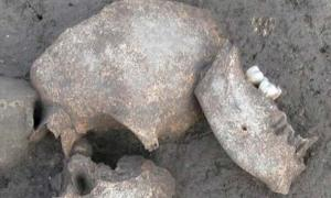 Portada - Los cráneos descubiertos en el yacimiento arqueológico de Le Cailar presentan señales de que las cabezas fueron embalsamadas. Fuente: © Fouille Programmée Le Cailar-UMR5140-ASM/CNRS