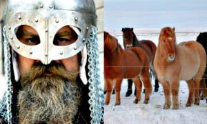 Portada - El poni islandés, una creación vikinga. (Fotografía: ABC/ Hans Splinter/Sela Yair/FLICKR)