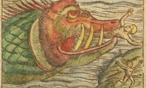 Enterrado en el cieno en el casco del naufragio de Gribshunden, los arqueólogos han descubierto ahora un barril que contiene el esqueleto de lo que parece ser un antiguo monstruo marino que mide dos metros de largo